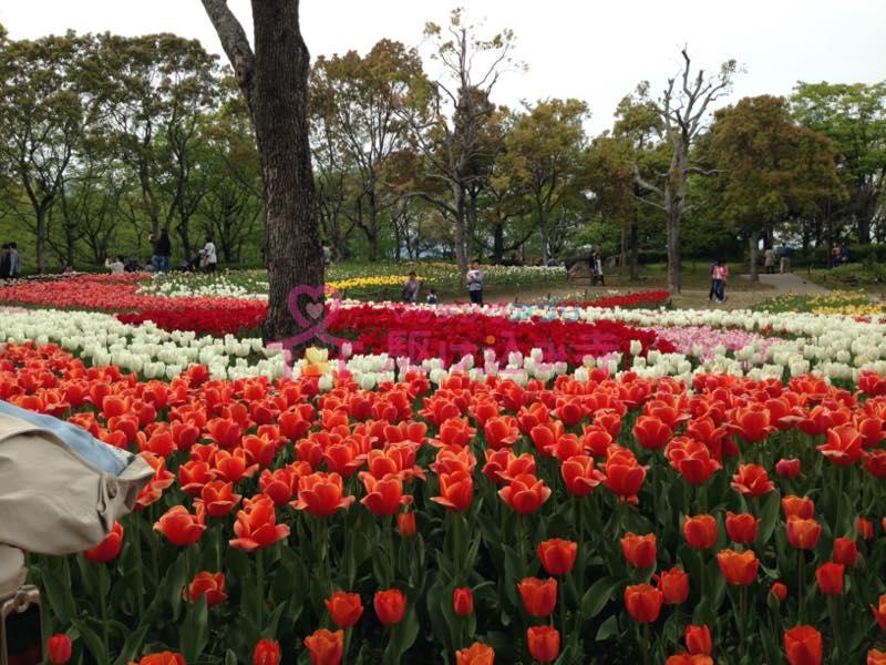 たくさんのバラが写った写真
