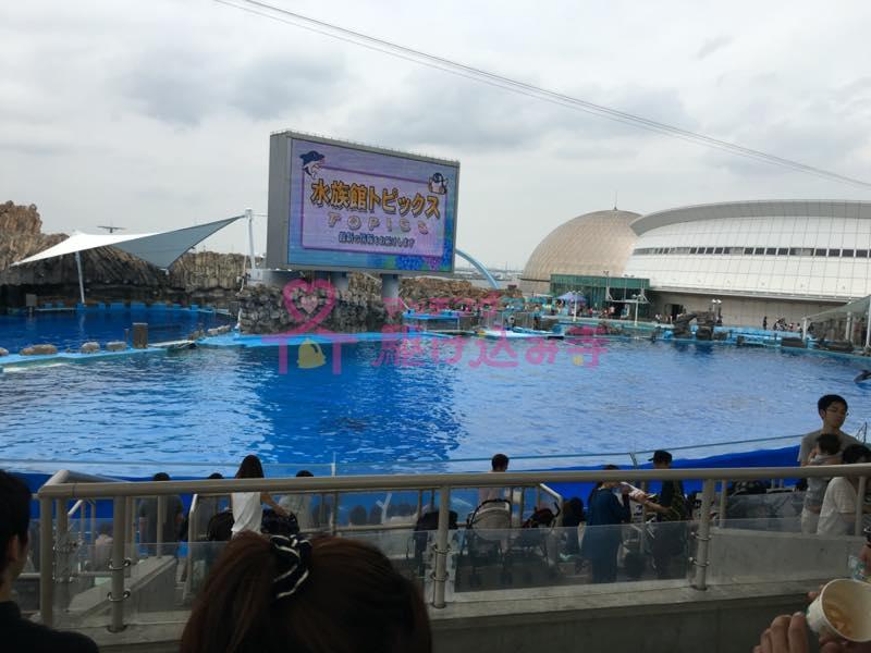名古屋港水族館のイルカショーの写真