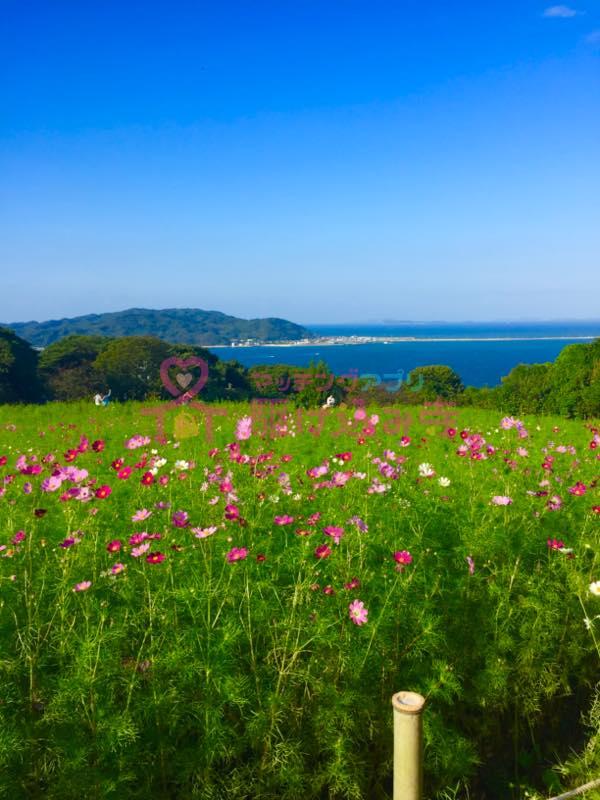 花と海の風景写真